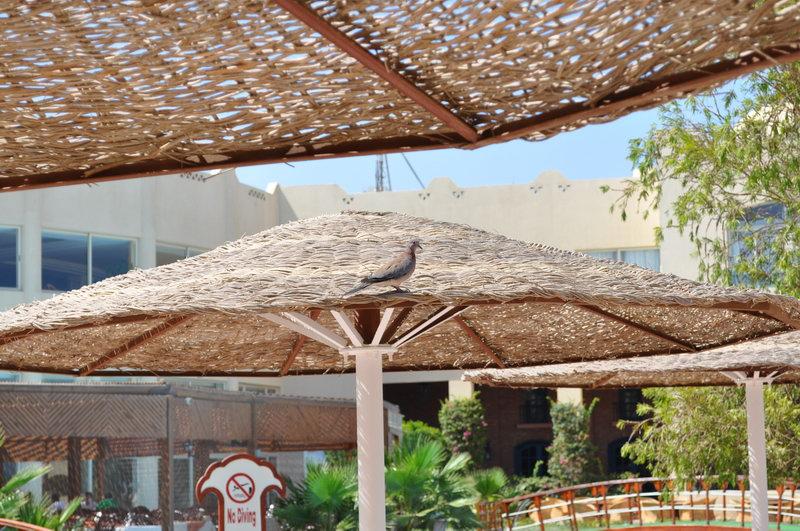 Egypt_0052