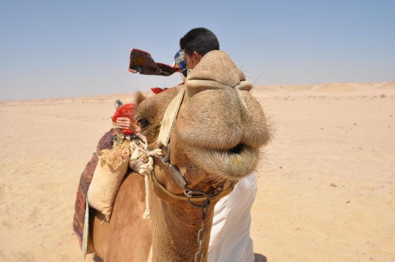 Egypt_0135