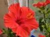 flowers006